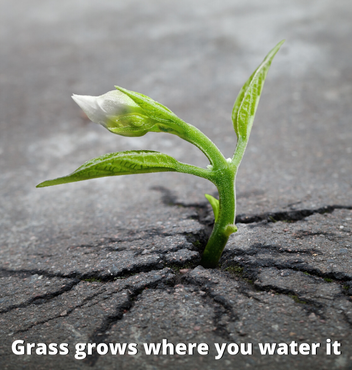 BI-Solutions_GrassGrows